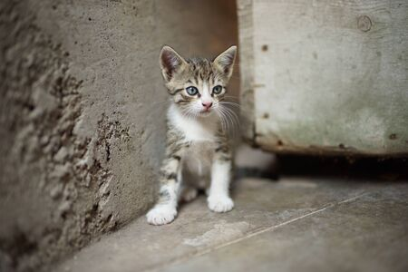Portrait of a cute tabby little kitty sitting outdoors, domestic lovely cat, charming baby animal 스톡 콘텐츠