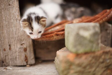 White little toddler kitten, portrait in his summer house, takes the first steps to the street