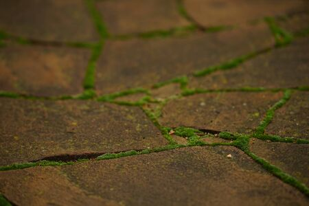 Brown pavement of wild stone with fluffy green moss in the seams 스톡 콘텐츠