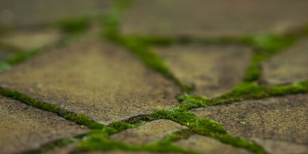 Old paved sidewalk made of wild stone with green moss in the seams 스톡 콘텐츠