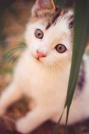 Cute white kitten sitting in the grass, domestic animals relax in summer garden