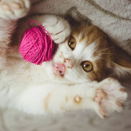 Gatito de jengibre juega con una bola de hilo, lengua de show de gato gracioso Foto de archivo