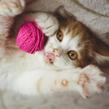 Ingwerkätzchen spielt mit einem Fadenknäuel, lustige Katzenzunge Standard-Bild