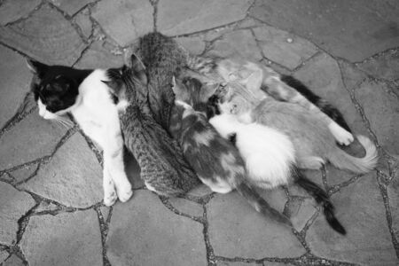 Cat feeding her kittens on the stone floor outdoor, top view