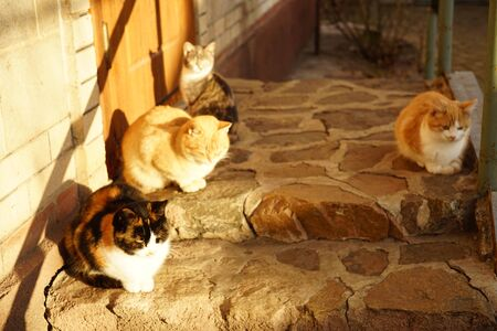 family kittens and cats relax outdoor on the doorstep