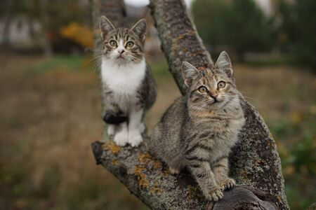 Two cute kittens sitting on a tree branch. Lovely young cats in nature