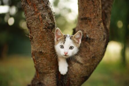 Funny white kitten play on a tree. Portrait of an domestic cat