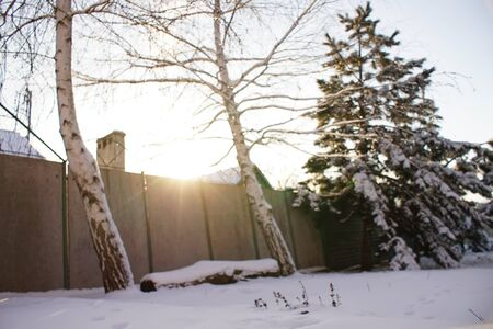 Two birch trees and log bench in the sunny winter garden Stock Photo