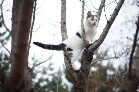 Cute white kitten walk on a tree. Portrait of an domestic cat in nature