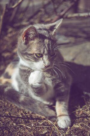Kitten fighter. The cat threatens his gaze and fist paws like a boxer. Banco de Imagens