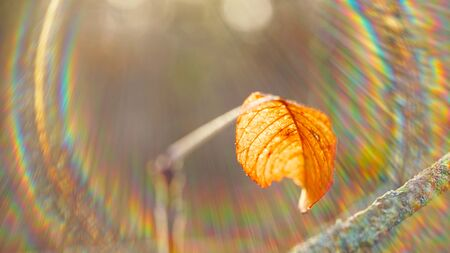 Fry brown autumn leaf on a branch in a sunny forest. Solar spectrum. 版權商用圖片