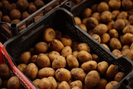 Dirty brown peeled potatoes in a plastic boxes.