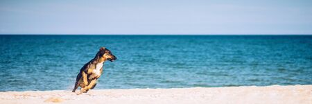 young puppy runs along the sea on the sandy beach