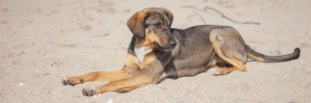 Young brown dog rest on the sandy sea beach. Reklamní fotografie