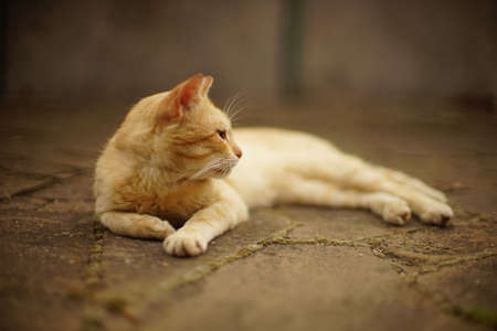 ginger cat rest on the summer street, side view, selective focus