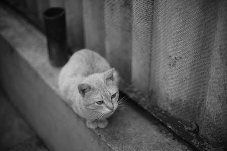 Cute cat sitting on the old rural fence. 스톡 콘텐츠