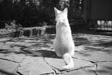 Cat rest in courtyard on the stone floor. Back view. Bw photo