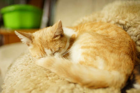 Ginger cat sleeps on a bed in a rural kitchen.