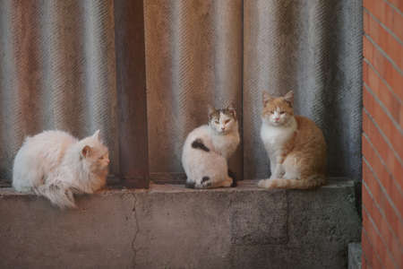 fluffy cats of different coat colors sit on a concrete block of a fence