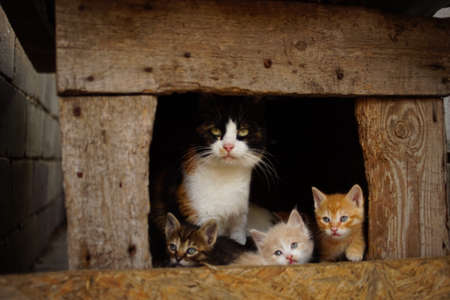 Mother cat sits with kittens in a doghouse