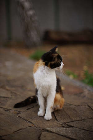 Tricolor kitty sitting in the garden on the old stone floor Archivio Fotografico