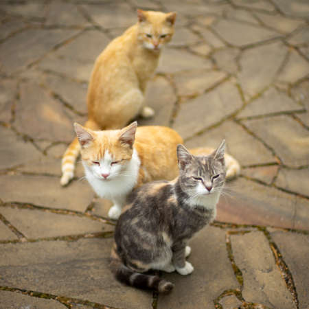 Three cats sit on a wild stone floor outdoors. Two in an embrace. The third is watching them