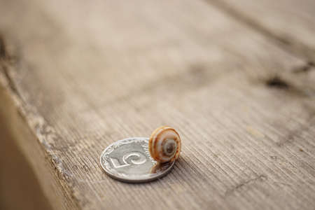 striped clam shell on a silver coin on a wooden table. Zdjęcie Seryjne