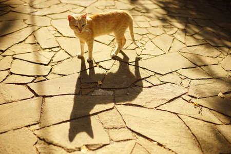 lovely yellow cat walk in sunny summer garden on the stone road with deep shadow