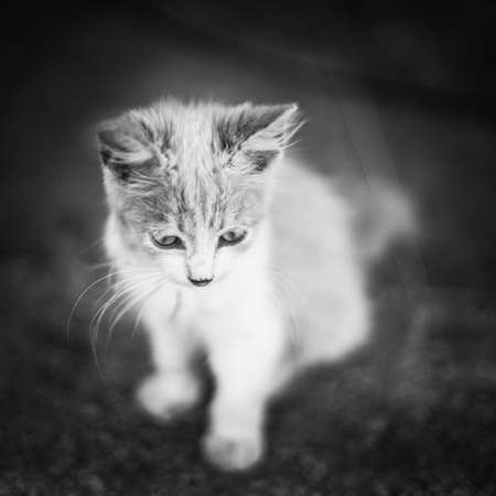 Cute fluffy kitten sitting on the road. BW photo Imagens