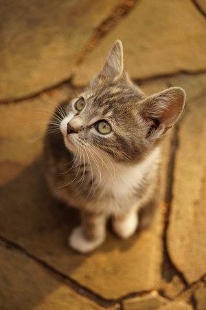 Lovely ashy kitten portrait outdoor. Cat sitting on the stone floor.