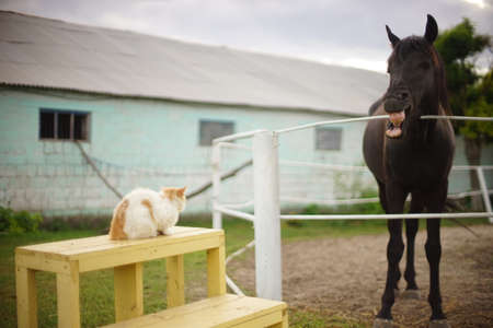 Horse grimaces and shows teeth to cat. Horse and cat on the territory of the stable.
