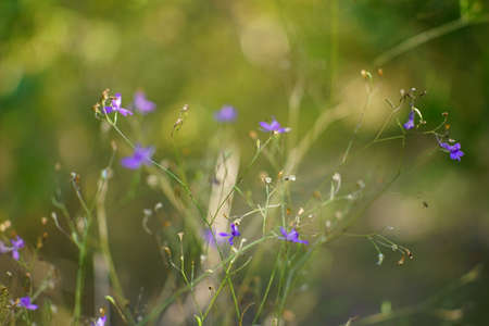Tender blue flowers grow in the wild garden
