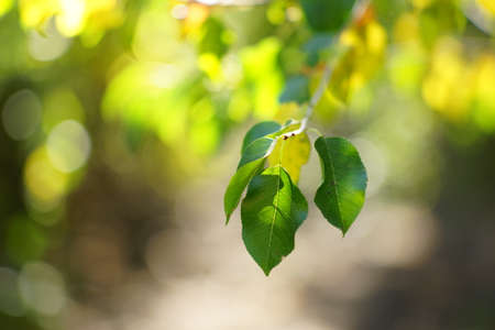 Amazing sunny forest. Green leaves on thee branch. Art card. Фото со стока