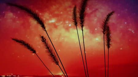 Silhouettes of ears of corn in amazing red orange sky Фото со стока