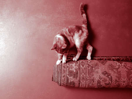 Cat lies by the roll of carpet and sharpens its claws.