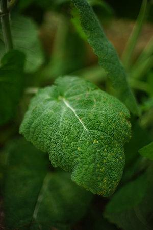 Green burdock growing in a summer garden Фото со стока