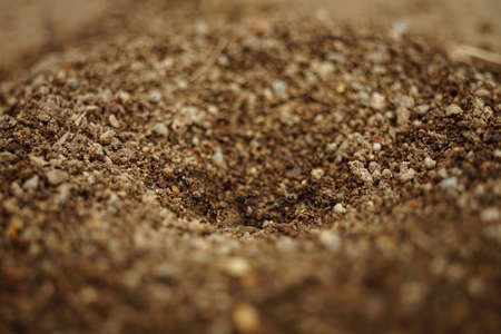 Small nest of ants close-up. Macro view of anthill