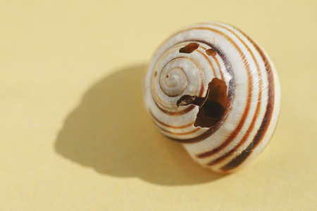 Old broken striped seashell on yellow table with shadow. Фото со стока