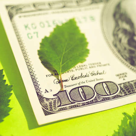 Hundred dollar bill and green leaves on sunny lime table.