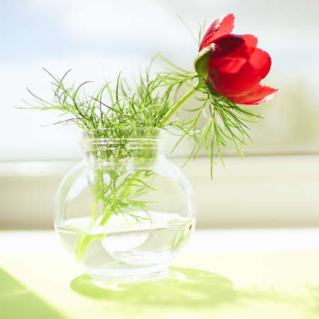 Red peony flower in a glass vase on green sunny windowsill.