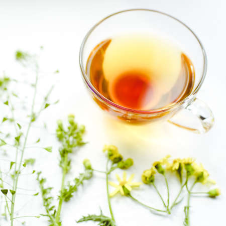 Herbal tea in a glass cup. Herbs and flowers on a white table around a mug with a drink.