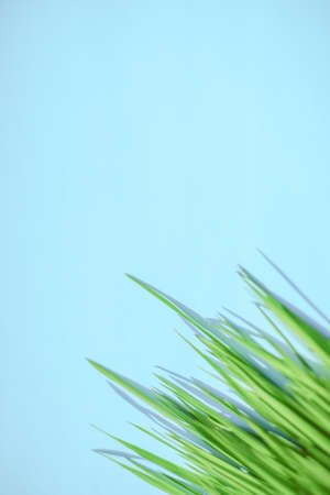 Fresh green grass on a blue table in corner. Place for text