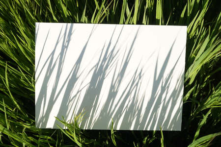 Abstract natural painting from grass shadows on canvas. Blank canvas in the grass of a summer sunny field.