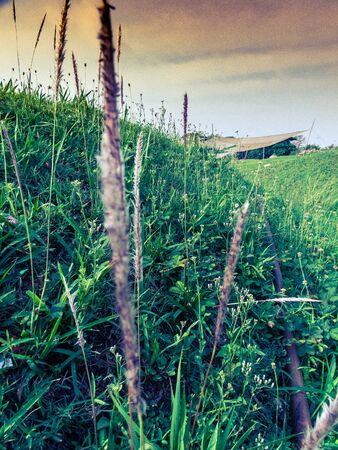 fairy garden: fairy garden in summertime scenes Stock Photo