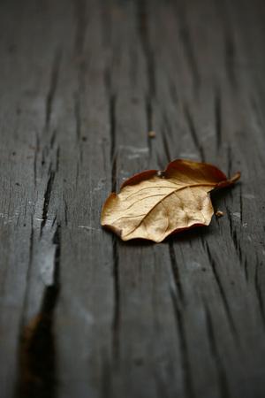 leafs: dry leafs closeup