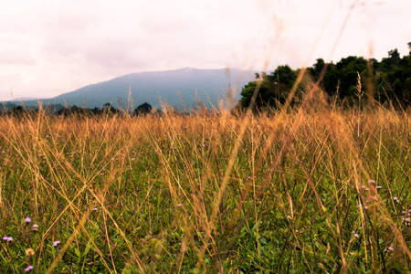 Meadow scene in natural park at Khao Yai, Thailand