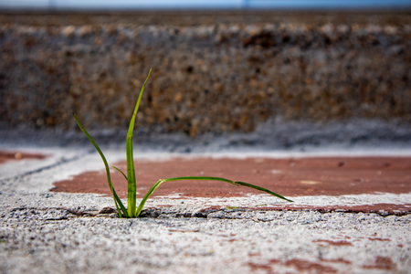 stem grass growing from cracking cement