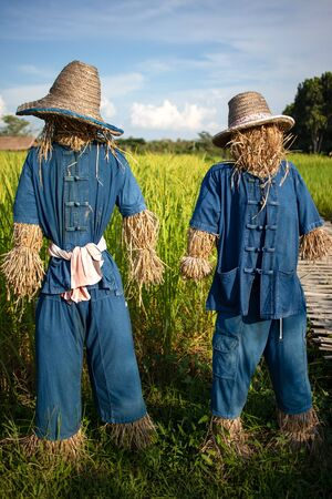 Scarecrows with hat and Mo Hom shirt standing at rice field