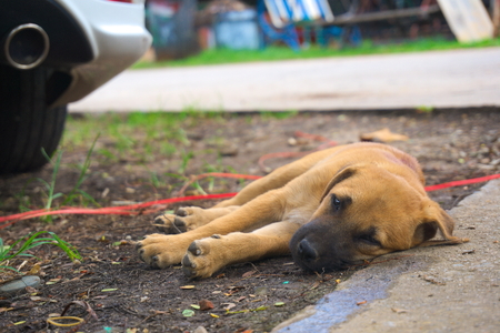 Puppy sleep on the ground near the car wheels. Stock Photo