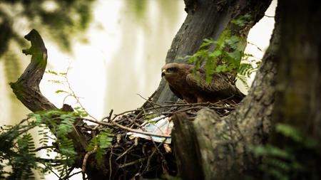 birds & protection Stock Photo